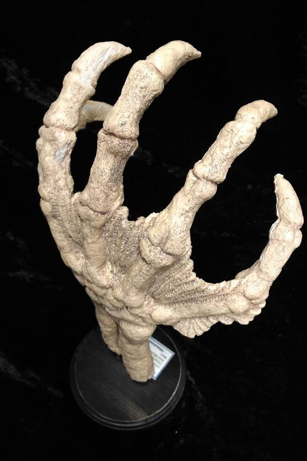 Fossile Hand eines Tiefen Wesens  - Ansicht 1