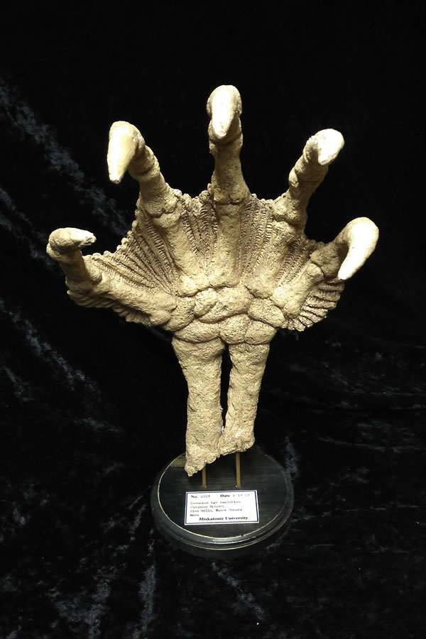 Fossile Hand eines Tiefen Wesens - Fund im Keller der Miskatonic Universität