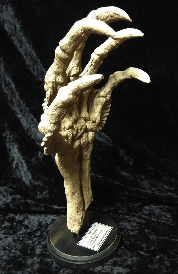 Fossile Hand eines Tiefen Wesens  - Ansicht 2